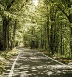 Road through the woods Royalty Free Stock Images