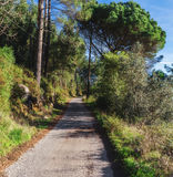 The road in the woods among the trees. Royalty Free Stock Photography