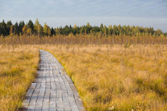 Road in the yellow autumn fild at the swamp. At sunset Royalty Free Stock Images