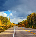 Road and yellow autumn forest Stock Photo