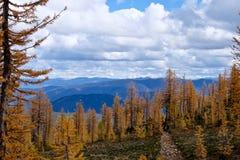 Road through yellow autumn forest to mountains. Stock Photos