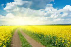 Road in yellow flower field, beautiful spring landscape Stock Images