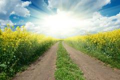 Road in yellow flower field, sun on horizon, beautiful spring landscape Royalty Free Stock Photo