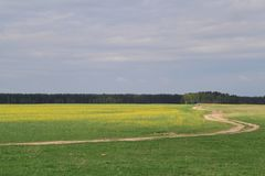 The road through the yellow-green field against a dark blue sky leads into the distance royalty free stock photography