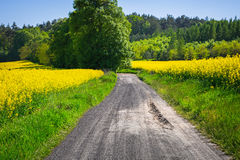 Road through yellow rapeseed field Royalty Free Stock Photography