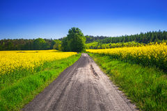 Road through yellow rapeseed field Royalty Free Stock Photo