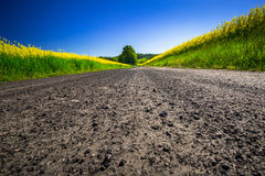 Road through yellow rapeseed field Royalty Free Stock Image
