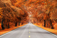 Road with yellow and red leaf Stock Photo