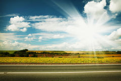 Road through the yellow sunflower field Stock Images