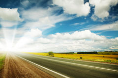 Road through the yellow sunflower field Royalty Free Stock Images