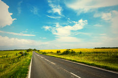 Road through the yellow sunflower field Royalty Free Stock Photos