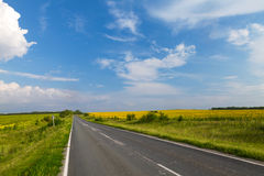 Road through the yellow sunflower field Royalty Free Stock Photo