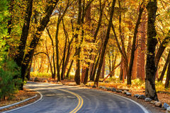 Road in Yosemite national park Royalty Free Stock Image