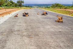 Road in Zambia Royalty Free Stock Images