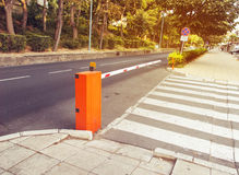 Road zebra Stock Photo