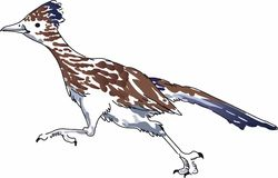 ROADRUNNER BIRD Royalty Free Stock Photo