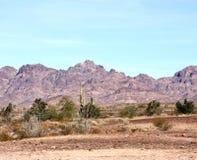 Roadrunner campground, Quartzsite, Arizona, USA. Saguaro cactus at Roadrunner campground, Quartzsite, Arizona, USA. Multicoloured mountains in the distance, blue royalty free stock image