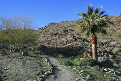 Roadrunner Trail. Path leading past a palm tree, Rancho Mirage, CA stock photo