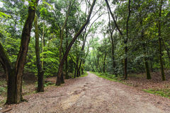 Roads in forest Royalty Free Stock Image