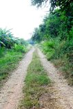 Road in forest. Roads in the forest for roaming Royalty Free Stock Images