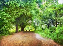 Roads of the forest. Roads to the light throgh the forest Royalty Free Stock Photo