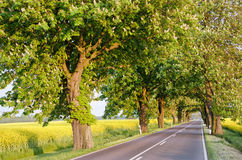 Roads of Germany. Blossoming chestnut trees along the countryside road. Germany, Europe Royalty Free Stock Image