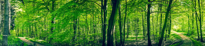 Roads in a green forest panorama Stock Photography