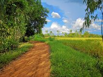 on the roads in the green rice fields and blue sky stock photo