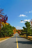 Roads In A Park Royalty Free Stock Image