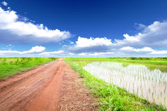 Roads in rice fields Royalty Free Stock Images