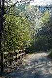 Roads in the spring woods. Scenic roads in the middle of Italian woods in spring Stock Photo