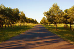 Roads of summer morning Stock Images
