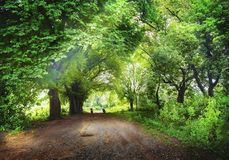 Roads through the forest. Roads to the light through the forest Royalty Free Stock Photos