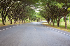 Roads with tree tunnel Royalty Free Stock Image
