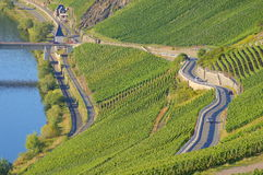 Roads in a vineyard Stock Photography