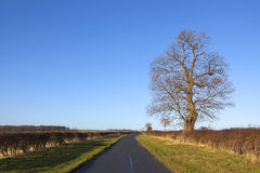 Roadside ash tree Stock Photos