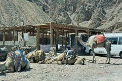 Roadside Bedouin cafe. Egypt Royalty Free Stock Image