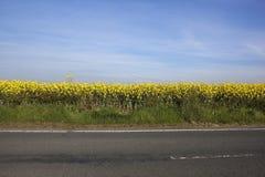 Roadside canola Stock Images
