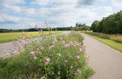Roadside cultivation with malva alcea and other wildflowers. Nectarplants for bees and other insects Stock Photo