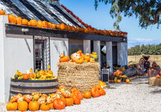 Roadside farm stall with pumpkins and vegetables Stock Images
