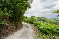 Roadside farmhouse in fruit trees on cloudy spring Royalty Free Stock Images