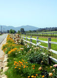 Roadside Flowerbed. Flowerbed along fence at Santa Ynez vineyard Stock Photos