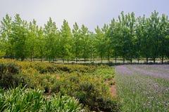 Roadside flowering farmland in sunny summer Stock Photo