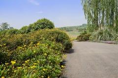 Roadside flowering shrubs in sunny summer Stock Image