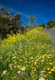 Roadside flowers on La Gomera Royalty Free Stock Photography