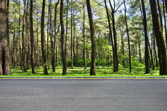Roadside and forest royalty free stock image