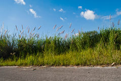 Roadside grass Stock Images