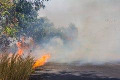 Roadside grass fires. Stock Photo