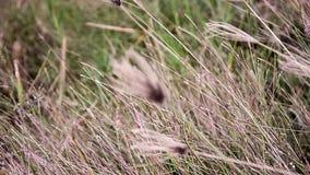 Roadside grass stock footage