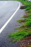 Roadside grasses Stock Image